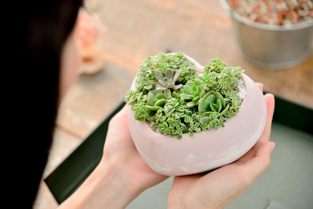植物療癒人心。 圖/有肉 Succulent & Gift提供