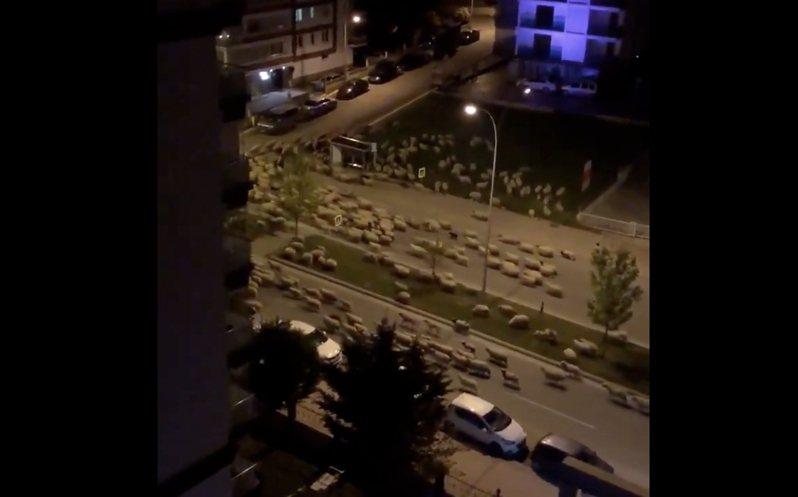 在土耳其解封前夕,出現成千上萬隻綿羊走上街頭,佔領城市街道,壯觀畫面全都被拍下。圖擷自twitter
