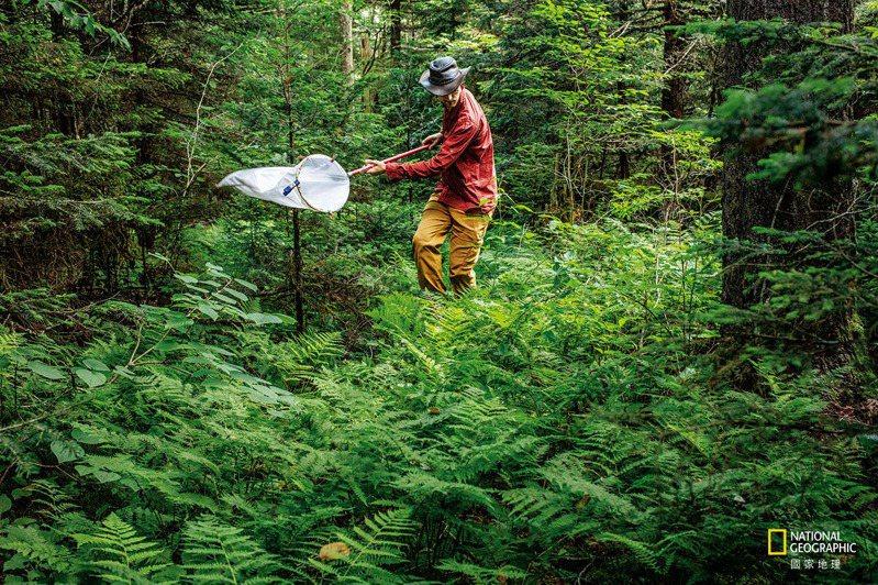 在大煙山脈的田納西側,加州大學洛杉磯分校的博士生格蘭.蒙哥馬利在枝葉間採集昆蟲,希望能複製70年前的一項調查。由於昆蟲族群的長期數據很稀少,因此牠們減少的幅度不明。過去,昆蟲學家不常計算昆蟲的數量,因為總是有好多好多。 攝影: 大衛. 李特舒瓦格 D AV I D L I I T T S C H WA G E R