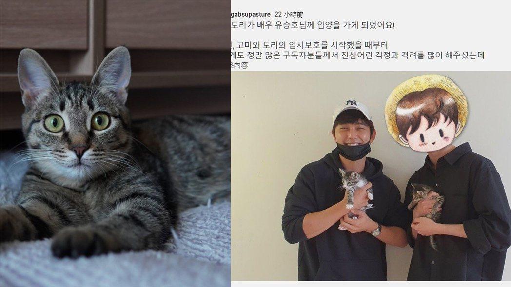 獸醫生YouTuber曾因曝光「俞承豪愛貓」登上版面,今爆為點閱虐貓。圖/擷自Y