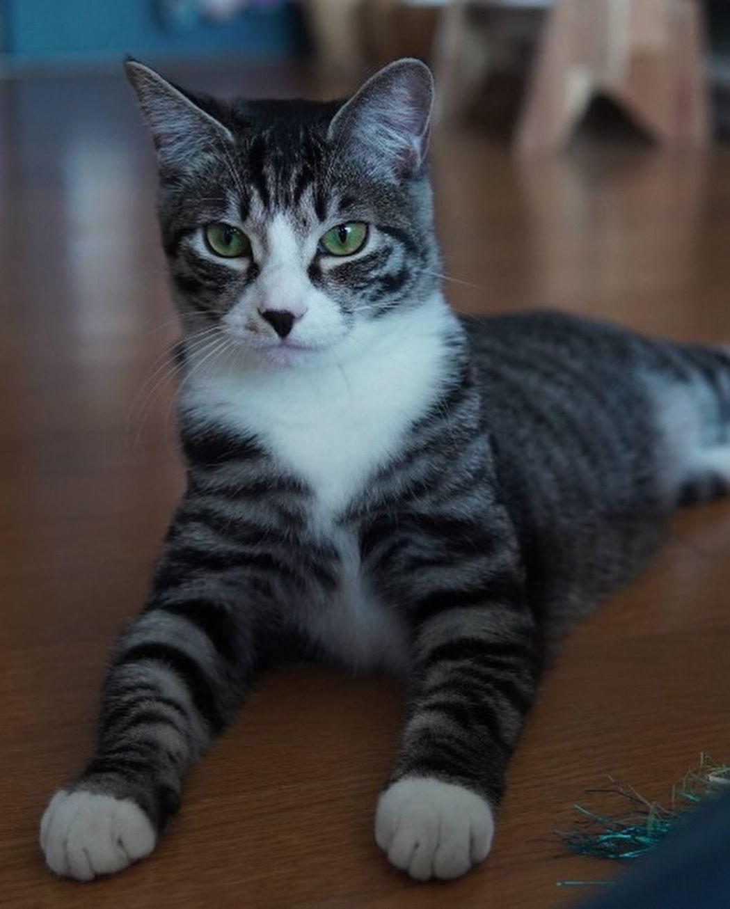 俞承豪分享貓咪近況,讓網友放心。圖/擷自IG