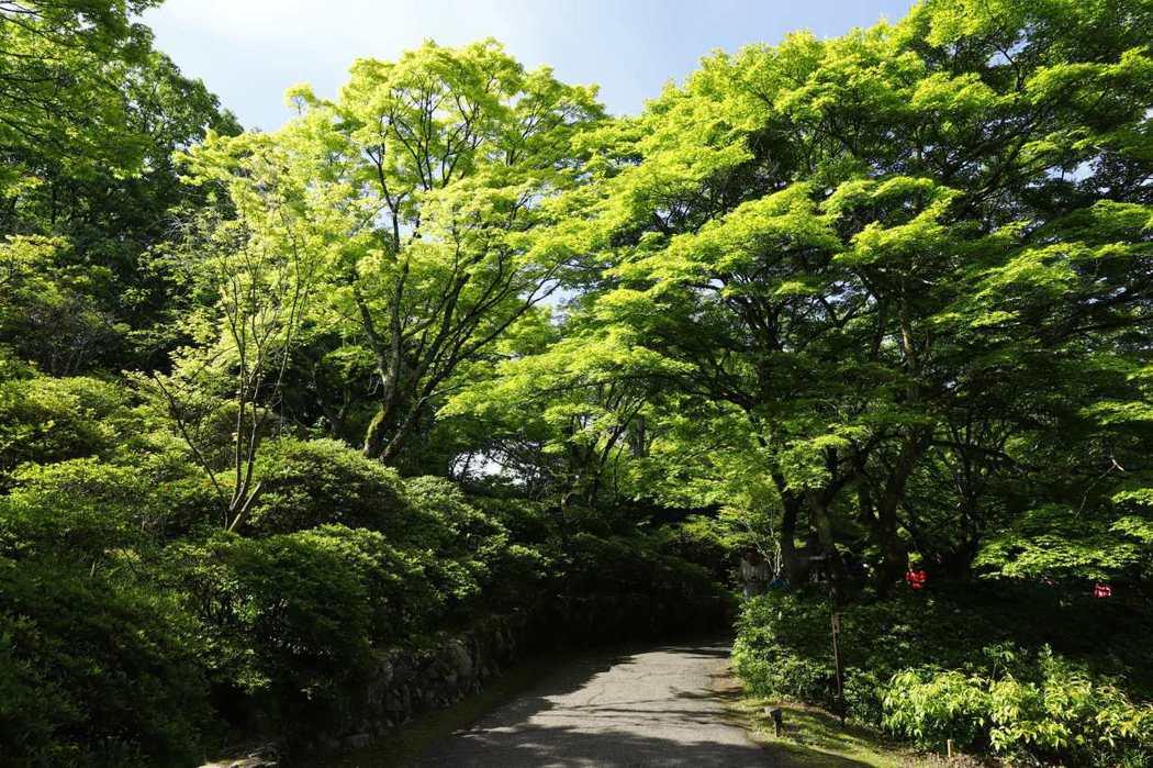 綠意蔥籠 若為秋季 御船山樂園將是一片楓紅