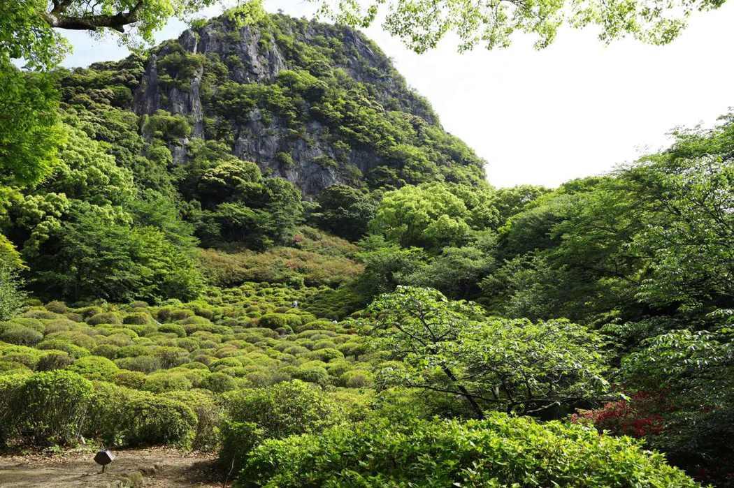 此時滿綠的「杜鵑花谷」,一個月前應是繽紛花地毯。