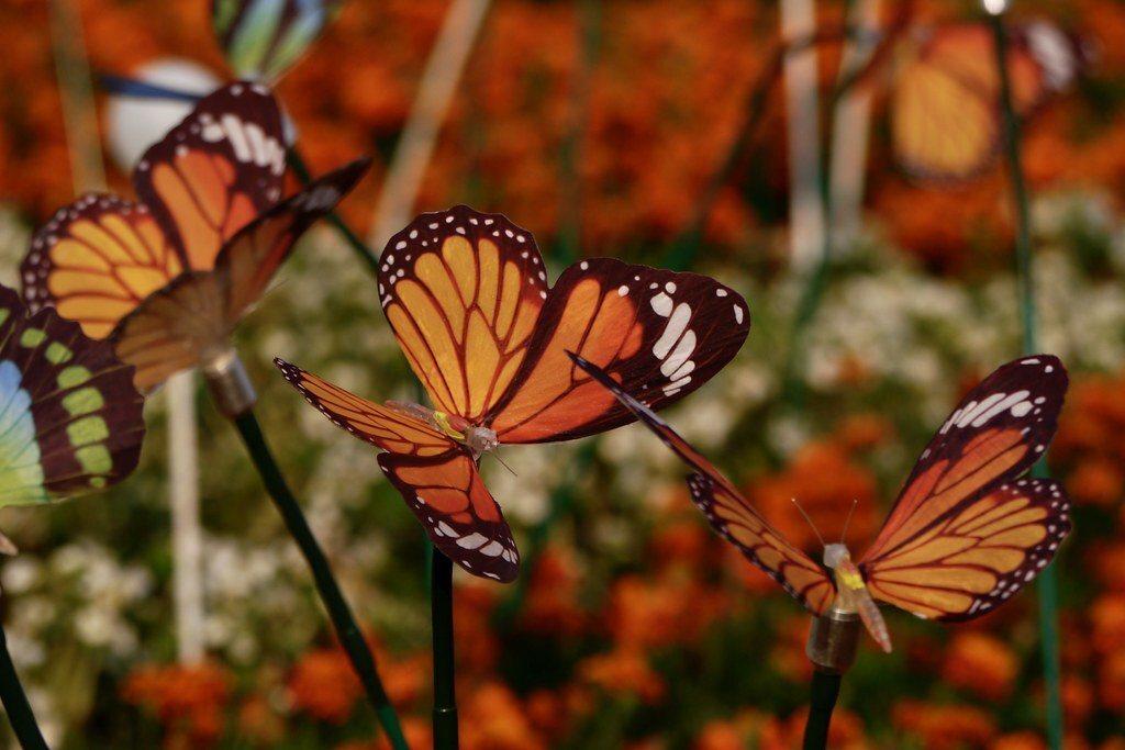 蝴蝶燈飾,營造隨風擺動的浪漫氛圍。