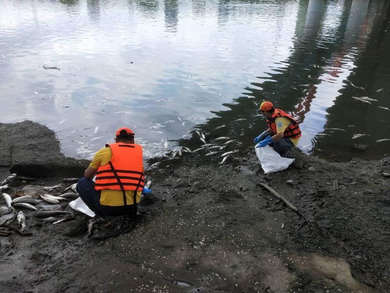 北市環保局指出,今天接獲民眾反映萬盛溪、新店溪的福和橋一帶出現死亡魚群,已動員94人清除處置,檢測發現水質溶氧量嚴重偏低,推測與近來炎熱高溫有關,疑因此造成魚群暴斃。圖/環保局提供