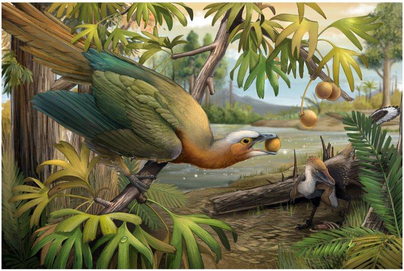 棲息樹上以果實為食的植食性古鳥類(左)和面臨食物來源匱乏的小型肉食性獸腳類恐龍(右)。鄭秋暘繪圖。圖/國輻中心提供