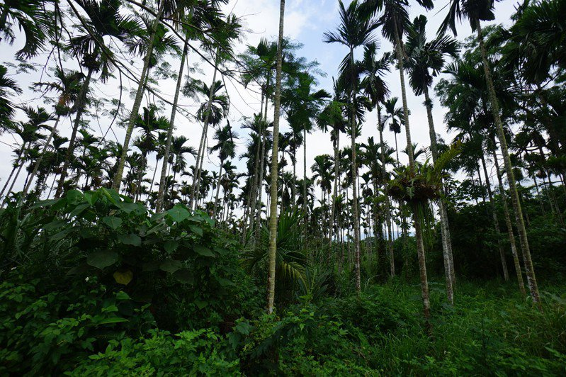 卜蜂集團在花蓮縣鳳林鎮申請3處養雞場,其中一處在鳳義里水源地。記者王燕華/攝影