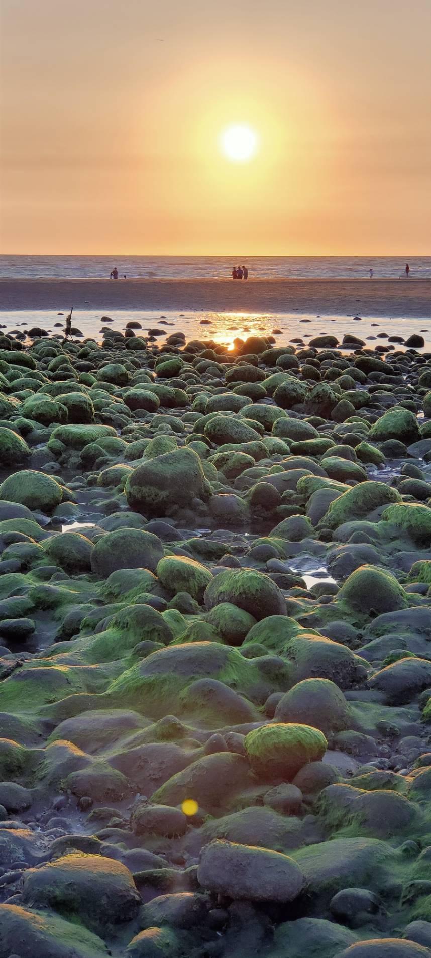 夕陽映照下,苗栗縣苑裡鎮西平里出水抹茶石海灘美不勝。圖/曾雪花提供
