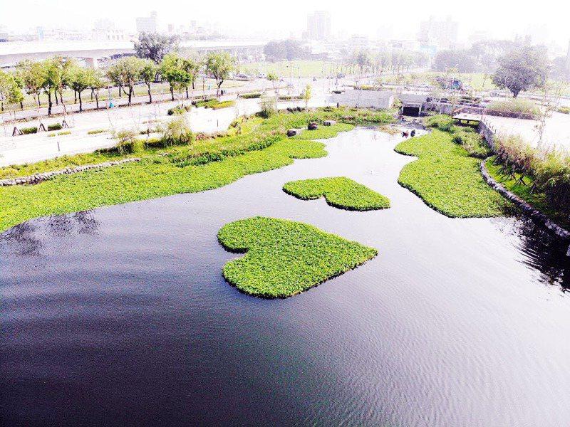 星泉湖的愛心狀水草,巧思引人搶拍。圖/建設局提供