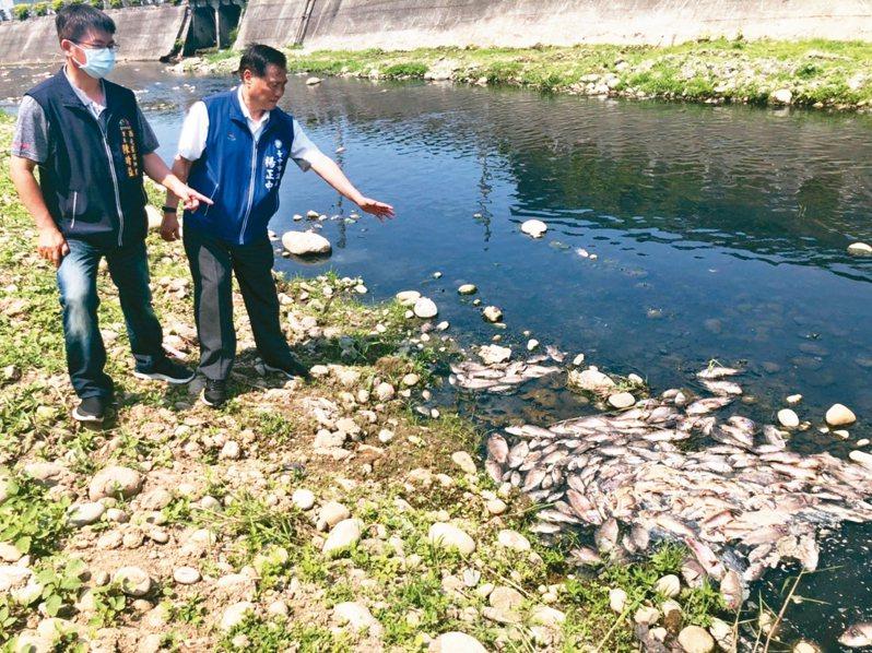 台中市東大溪下游昨又見魚群集體暴斃,台中市議員楊正中(右)怒批太離譜。 圖/楊正中議員提供