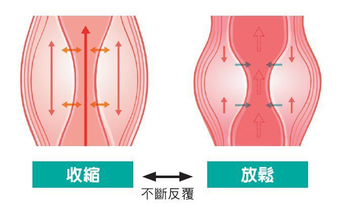 小腿肚的幫浦作用如果變差的話,很容易造成浮腫。肌肉藉由反覆收縮與放鬆的「擠乳作用...