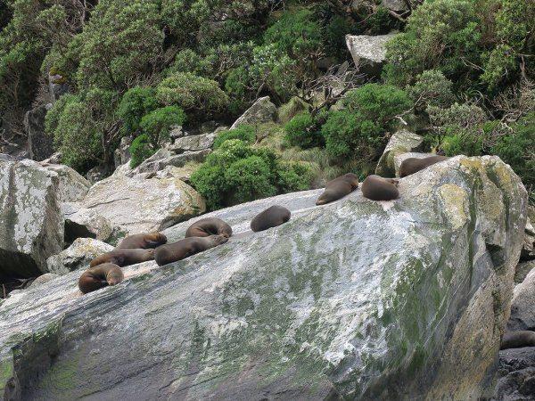 米爾福斯峽灣(Milfors Sound)