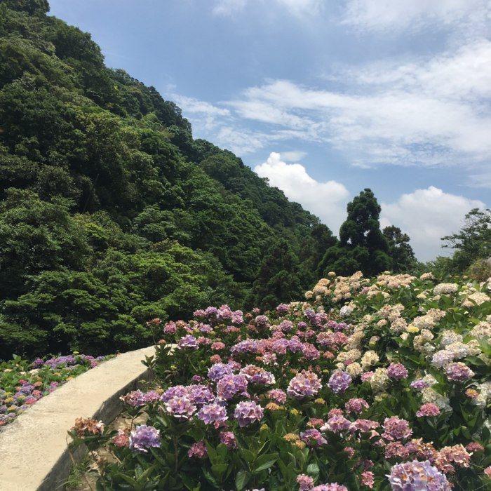 大梯田花卉生態農園。 圖/FunTime