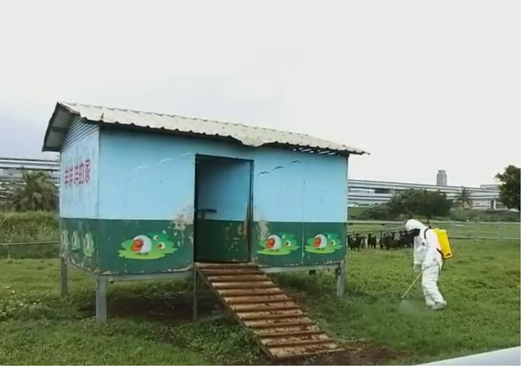 新北市動保處協助派員至二重疏洪親水公園內羊場驅蟲消毒。圖/新北市動保處提供