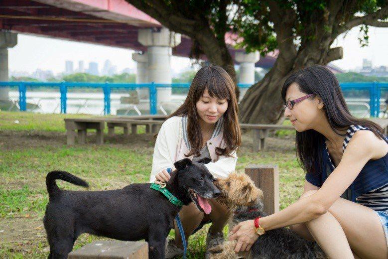 飼主只要做好寵物毛外寄生蟲預防就不用擔心SFTS。圖/新北市動保處提供