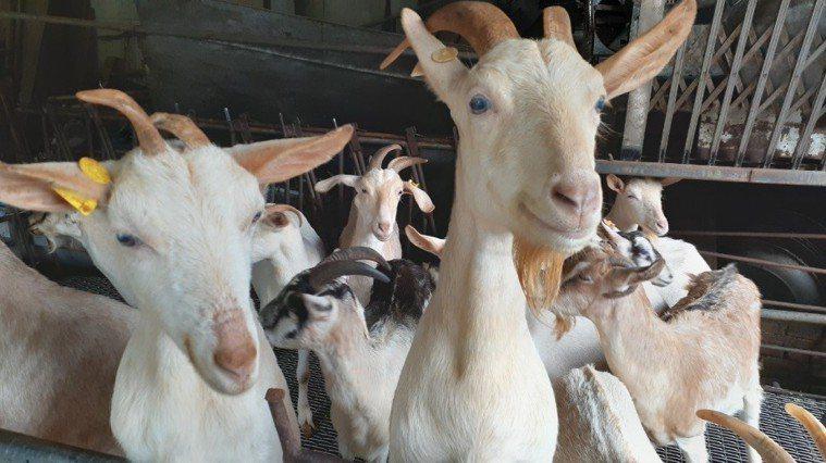 SFTS屬於新興人畜共通感染病。圖/新北市動保處提供