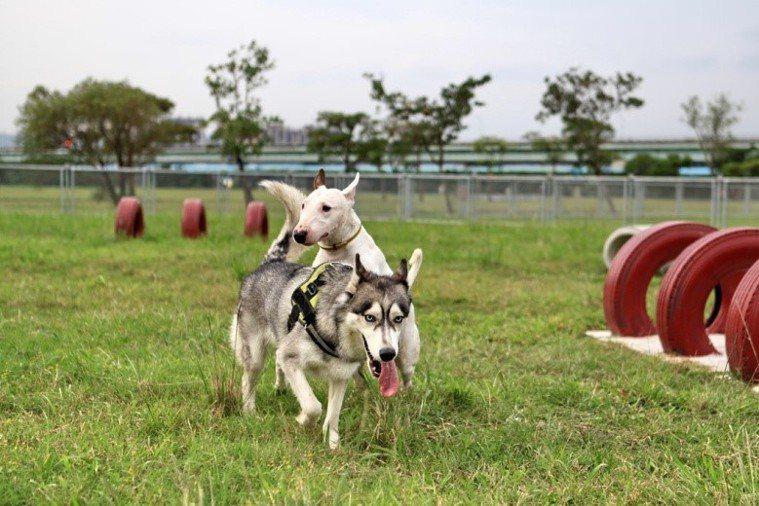 二重疏洪親水公園的「羊咩咩的家」的羊隻皆有定期做健康檢查及施打疫苗。圖/新北市動...