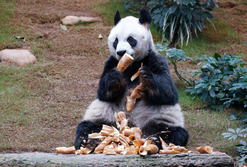 海洋公園若倒閉2000人失業,7500隻動物權益堪憂。 中國新聞社