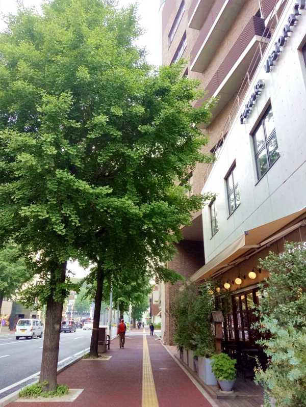 福岡街景 銀杏林立