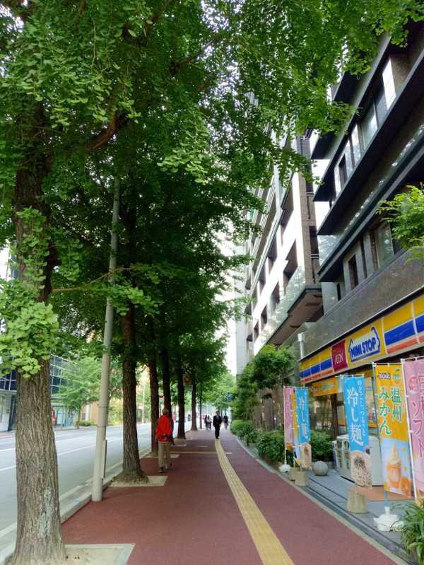 銀杏轉黃季節 福岡街景肯定極美