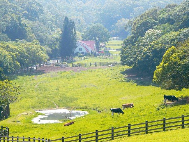 有如歐洲美景般的飛牛牧場。 記者羅建怡/攝影