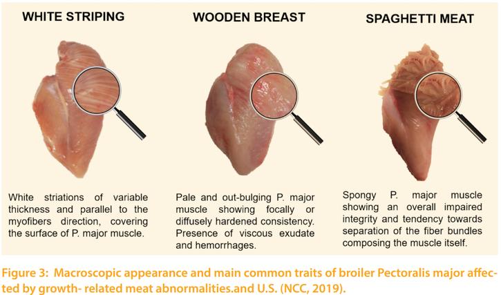 雞胸肉存在3種異常症狀。左邊為雞肉中會出現的「白條紋」,看起來像是一條條傷痕,主...
