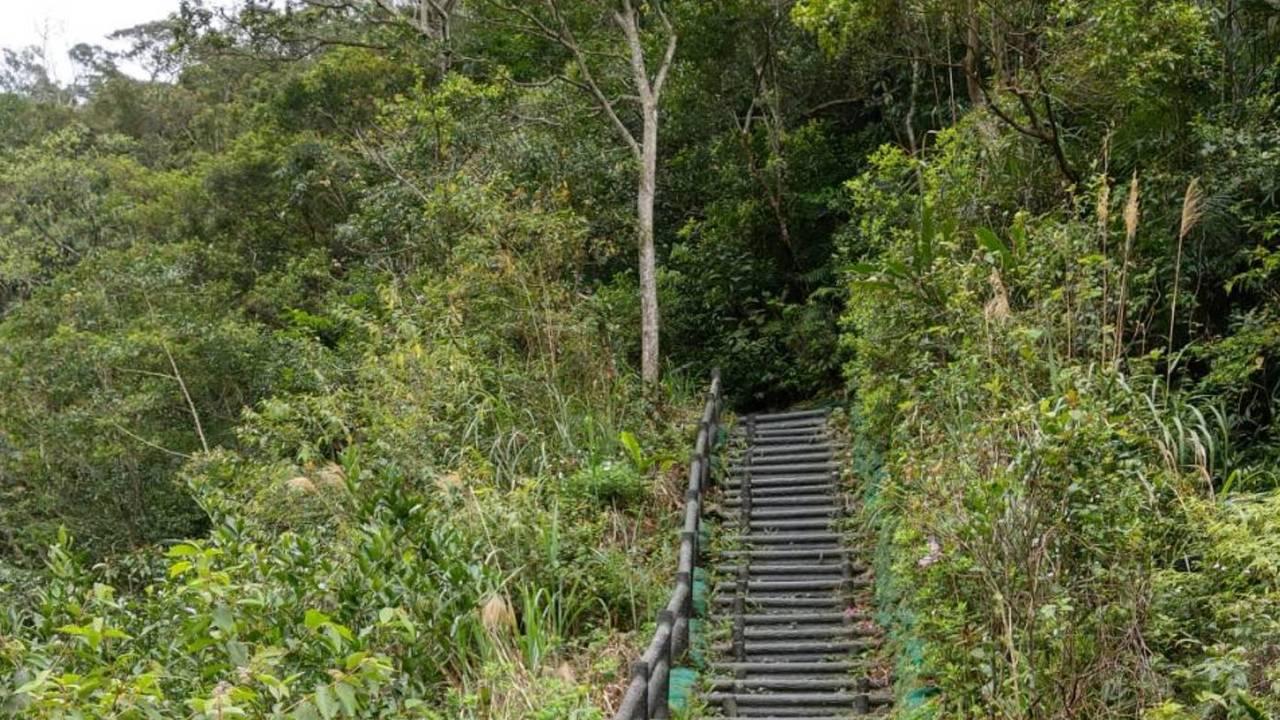 望龍埤後方的飛龍步道,走一圈運動健行大約1小時。 圖/戴永華攝影