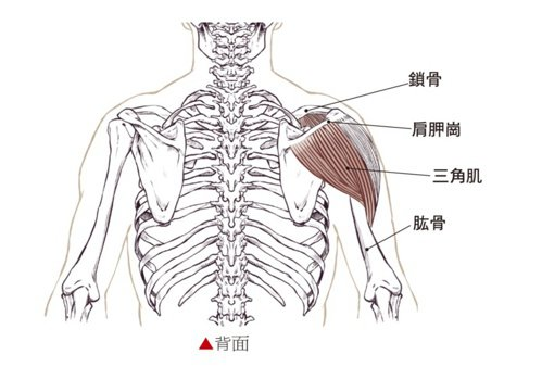 手臂疼痛對應肌肉透視圖。 圖/蘋果屋出版社提供