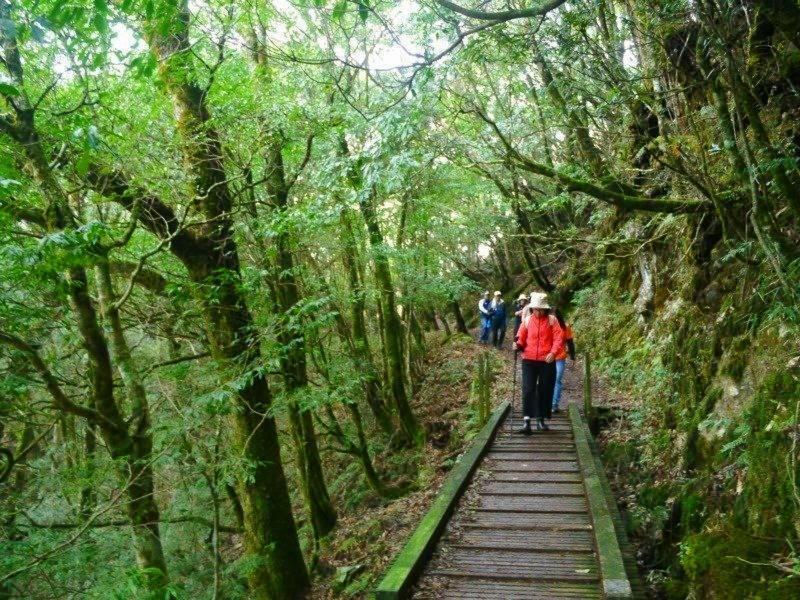 中之關古道沿途林相優美,不少路段都有鋪設木棧道,上年紀的遊客走來也不會太辛苦。 ...