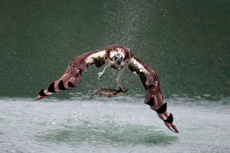 拍鳥俱樂會年度會員作品展精彩作品。圖/黃蜀婷提供