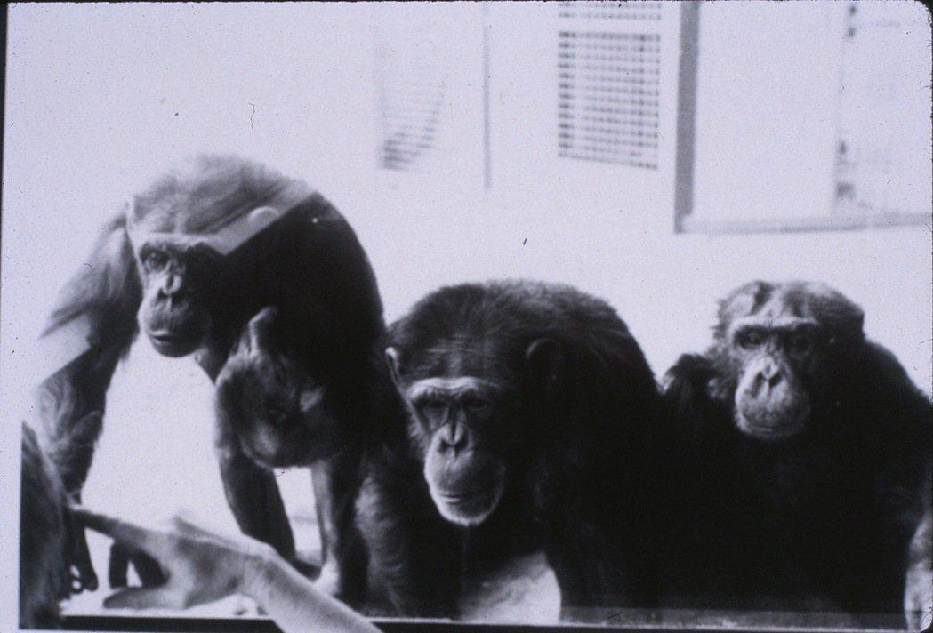 摩嘉、華秀與路勒斯。 圖/Friends of Washoe