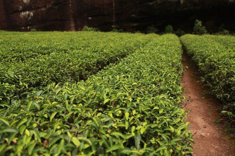 非石油化學衍生的成分,主要有三個來源:礦物來源、植物來源、菌種來源,如茶樹精油是...