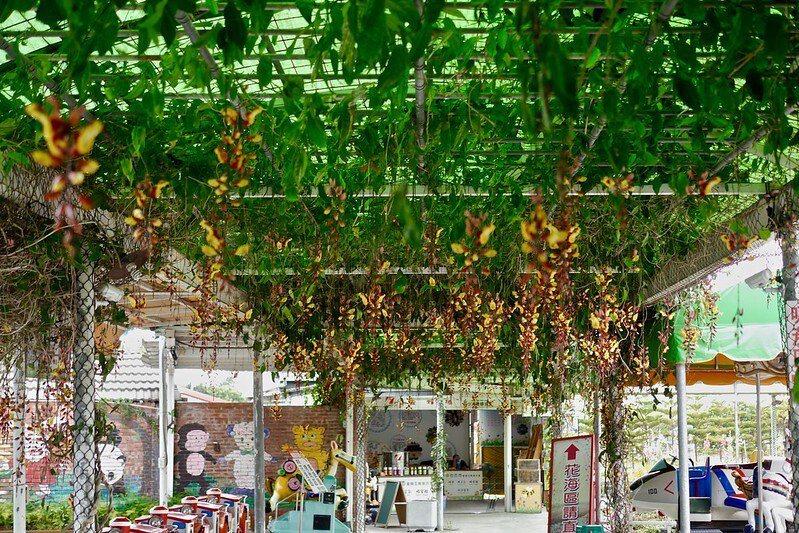 園區入口的跳舞女郎花正盛開,迎賓味濃的花兒隧道。