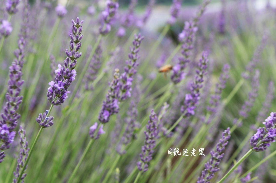 心曠神怡的是,空氣中總是充滿了薰衣草的香氣, 獨特的自然香氣是難得能體驗到的。