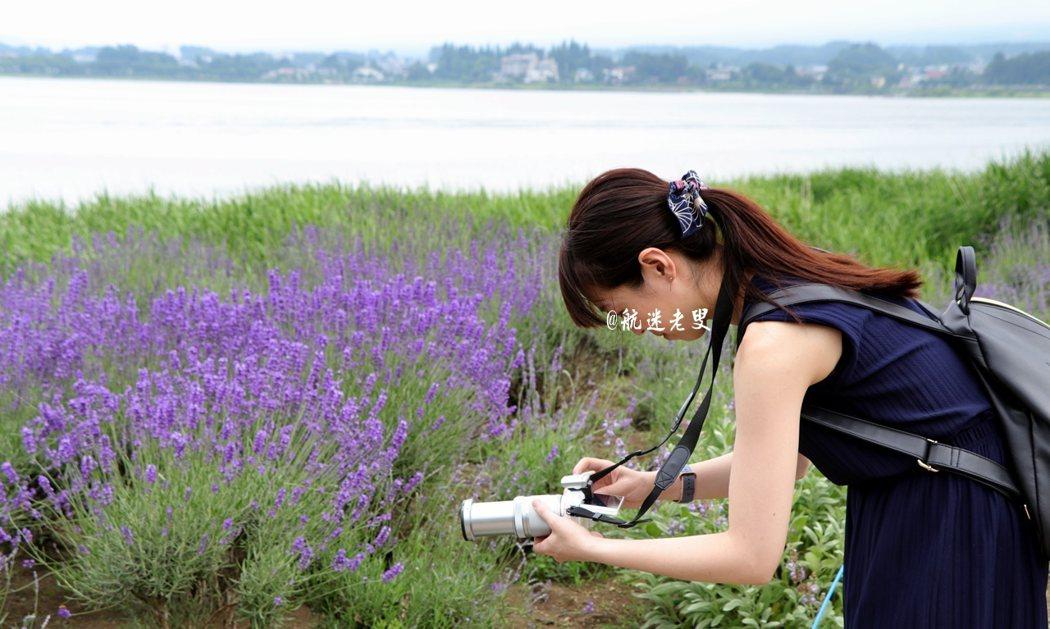 置身薰衣草的海洋裡,我的眼睛完全不夠用, 相機也有點吃不消,因為我一直在不停的按快門, 河口湖畔,拍花的遊客,也永遠是我眼中的風景...