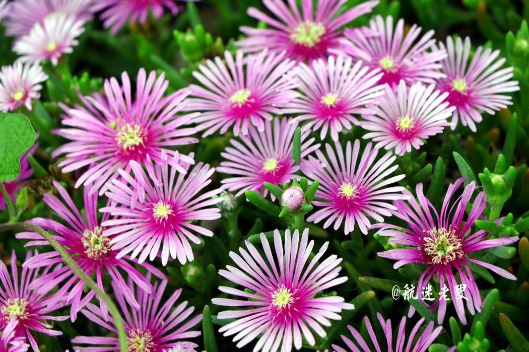 這小花深深的吸引我的目光,總不忘為它拍上幾張美麗的身影。