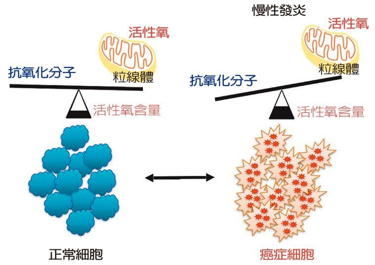 活性氧促使癌細胞分泌許多發炎因子,營造有助於癌細胞發展的慢性發炎微環境,且強化轉...