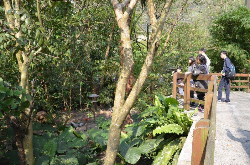 台北市立動物園裡占地4公頃的鳥園區完全沒有人造光源,入夜後彷彿野外世界,成為大台北都會區中難得沒有光害的「黑夜」淨土。圖/台北市立動物園提供