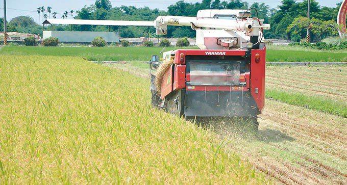雲林斗南鎮農會在2014年赴日取經,成功將日本富山縣的越光米稻種移植到台灣栽種。...
