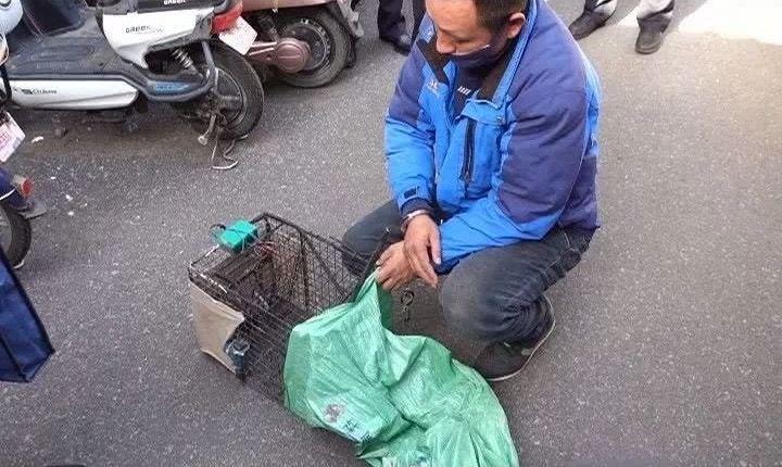 男子捉野貓扮兔肉賣餐廳,行徑引發網友批評。圖擷自頭條新聞