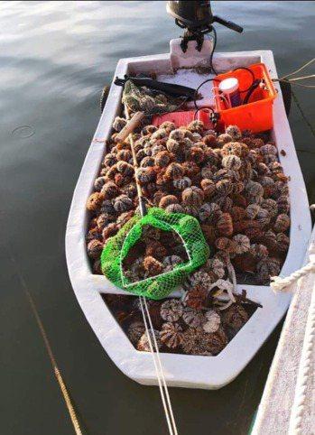 陳盡川說,以前澎湖漁民出海補海膽,都是滿到船裝不下了才返港,也感嘆如今漁業資源不...