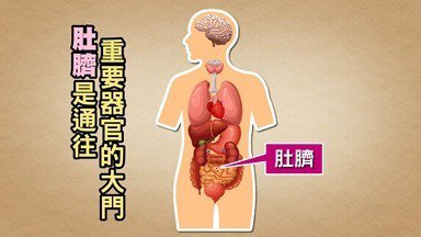 肚擠是人體重要器官,可以觀察出許多疾病。圖/許秉毅提供