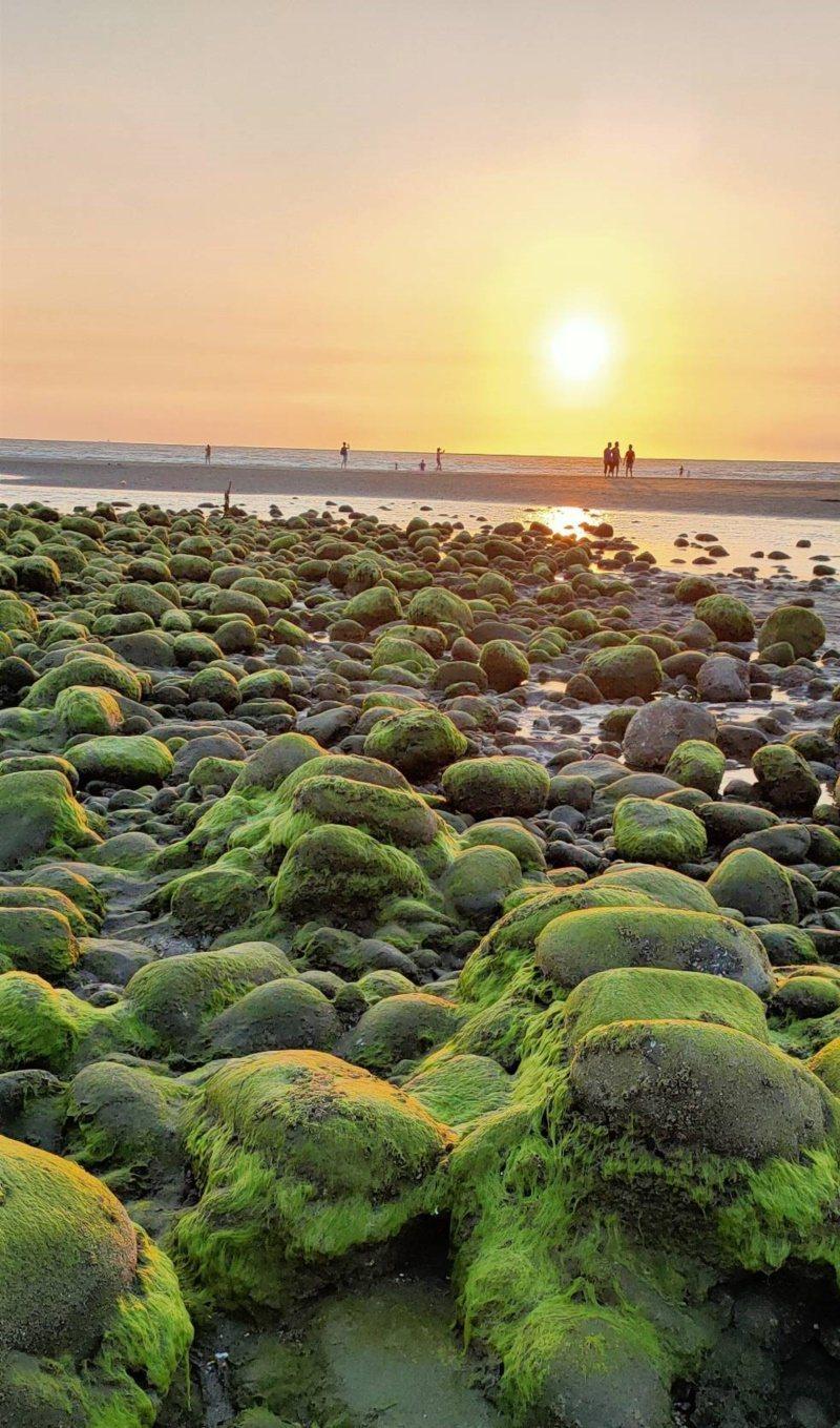 苗栗縣苑裡鎮抹茶石海灘在夕陽輝映下,顯得更加美麗。 圖/曾雪花提供