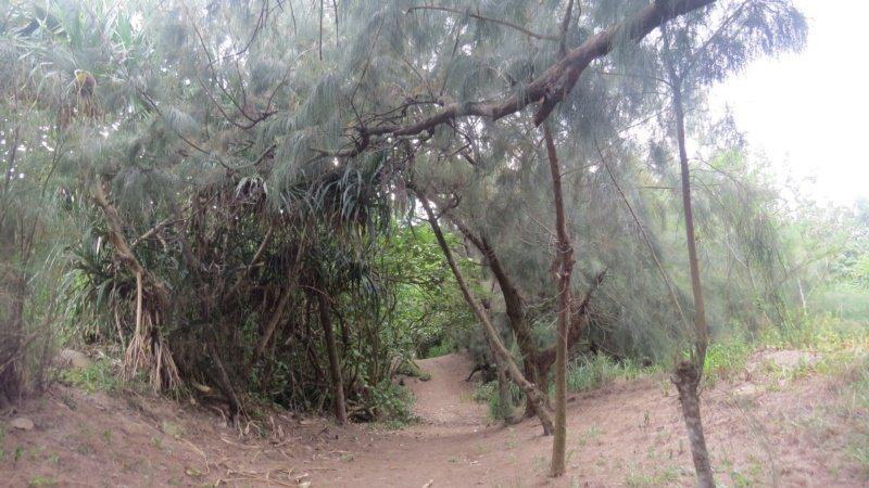 苗栗縣苑裡鎮「心雕居」後方秘密小徑,直通到海堤。 圖/范榮達 攝影