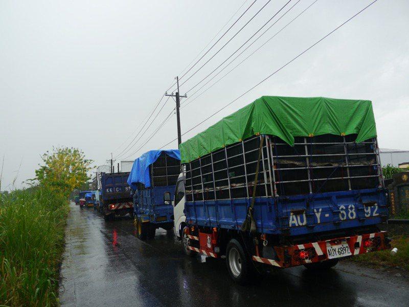 正值一期稻作收割期,農民排隊準備將上午剛收割的稻穀送往穀倉烘乾。記者徐白櫻/攝影