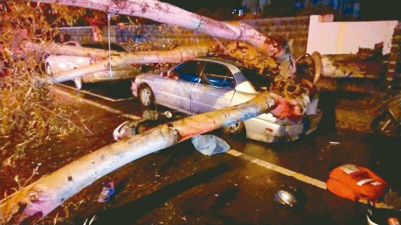 台南市北區公園路昨晚發生路樹倒塌壓倒女騎士事件,市府將調查是否與大雨有關。 記者黃宣翰/翻攝