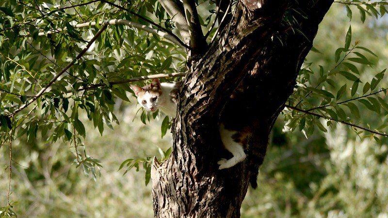 可愛的貓咪,被狗追趕著迅速地爬到樹上。