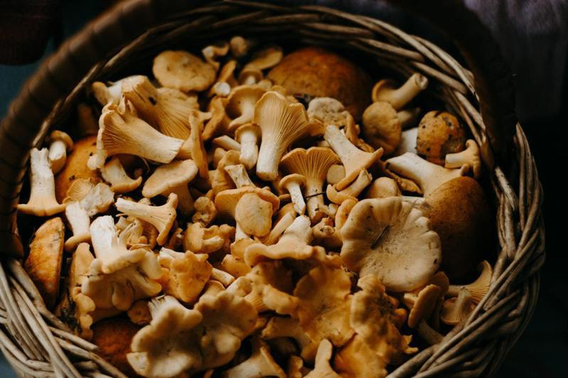 蕈菇類是富含營養的食物。圖/摘自Pelexs