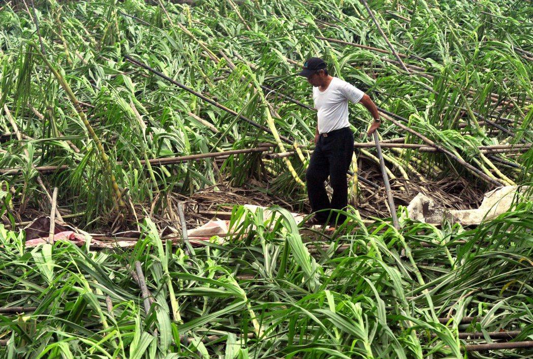 難以控制的天災,可能使農民一整年的心血付諸流水。 圖/法新社