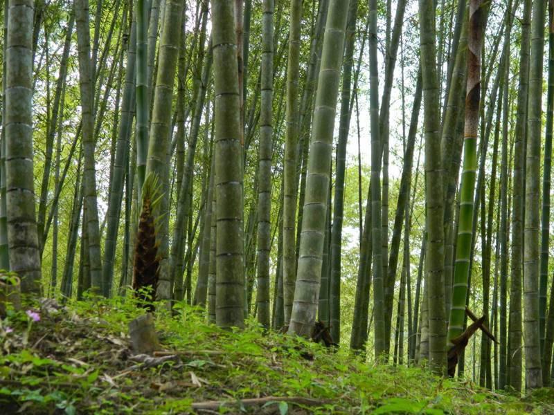林務局南投林區管理處考量疫情,今年國有林出租地租金開徵減免,且延至10月1日辦理開徵。圖/南投林管處提供